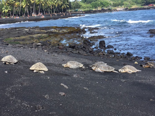 Black Sands Beach - Turtles
